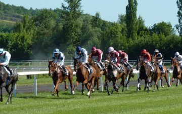 疾走する競走馬