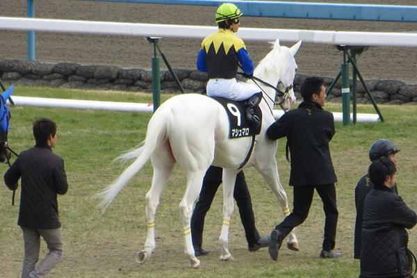 馬場入場するマシュマロ
